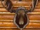 Custom Framing Vancouver - Charlie's Moose